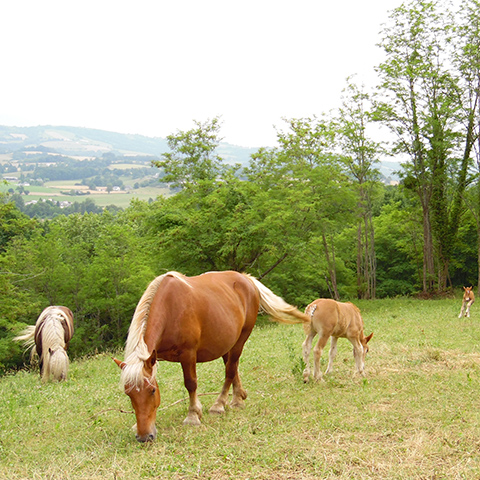 http://chambresdhote-azkena.fr/wp-content/uploads/2016/09/chevaux-pays-basque.jpg
