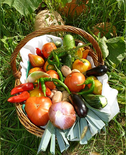 http://chambresdhote-azkena.fr/wp-content/uploads/2016/09/legumes-du-jardin-azkena3-441x540.jpg
