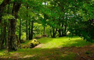 forêt d'Iraty